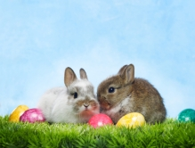 Easter bunnies with colored eggs on grass